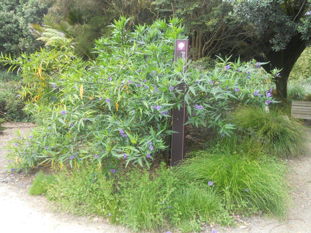 il est agréable de se promener dans le jardin botanique de San Francisco