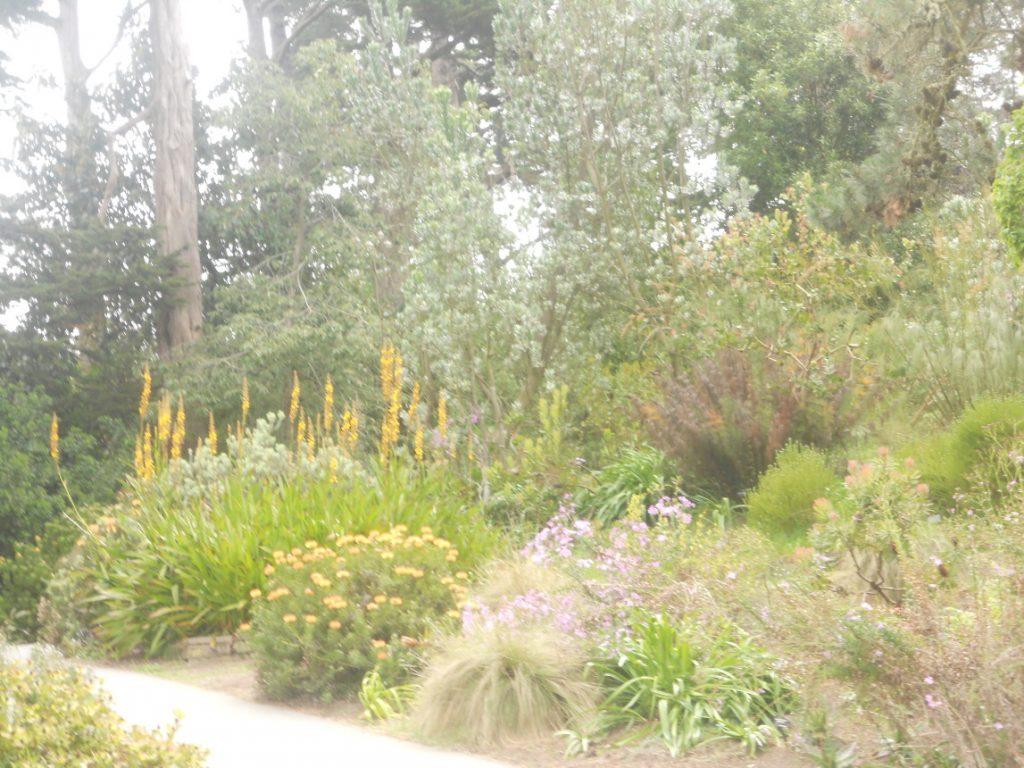 Nous sommes allées un dimanche au jardin botanique de San Francisco