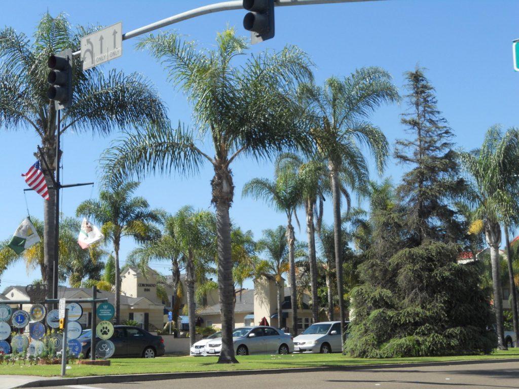 quelle bonheur ces rues à palmier à San Diego