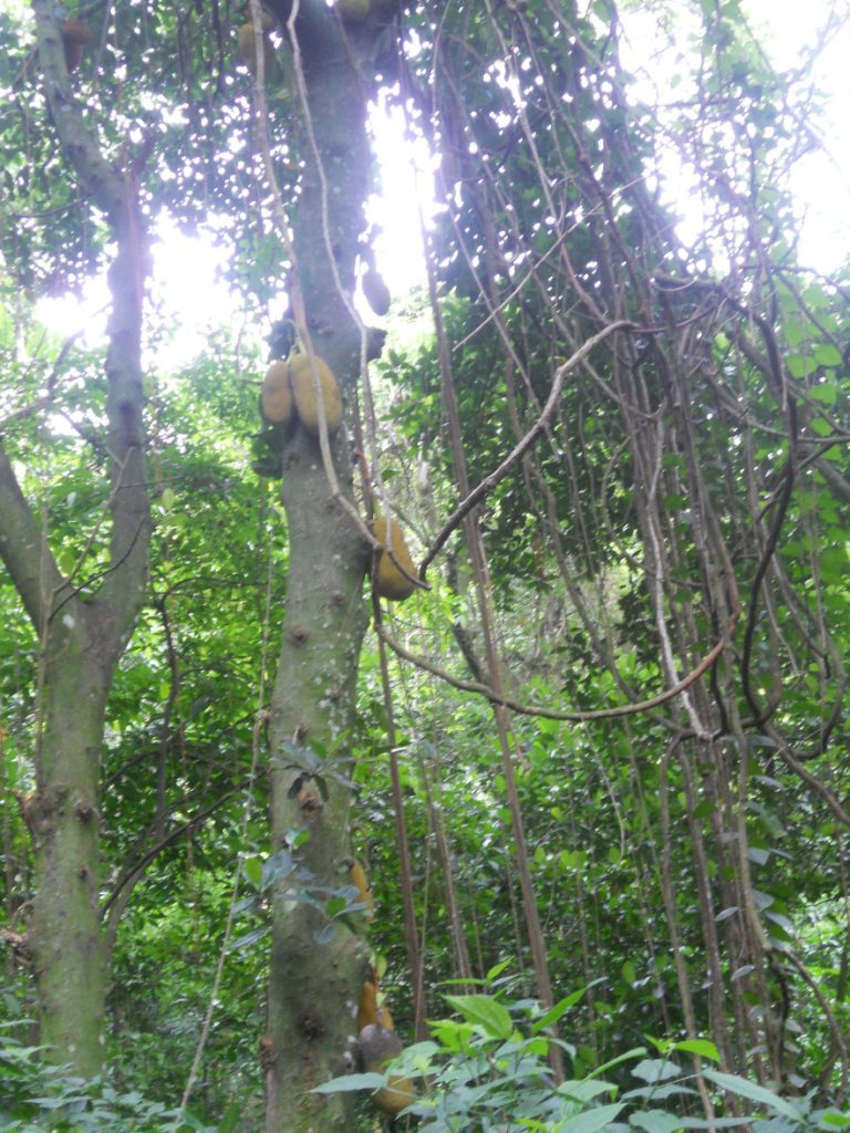 nous passons dans la forêt tropicale