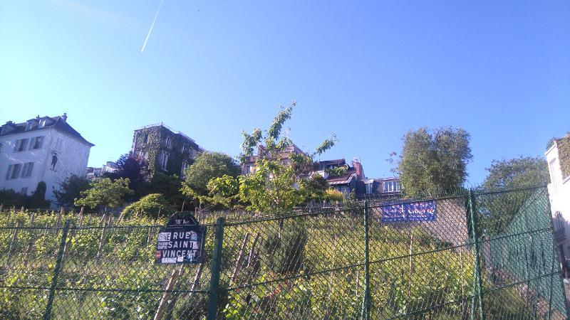 visiter les vignes de Montmartre
