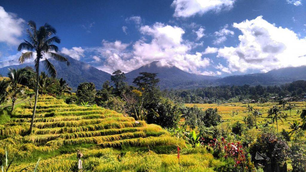 les rizières de Jatiluwih sont incontournables
