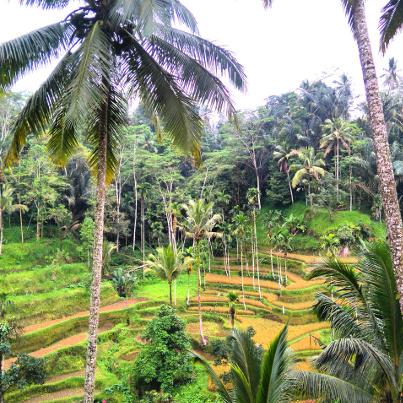 autour de Ubud il y a des rizières