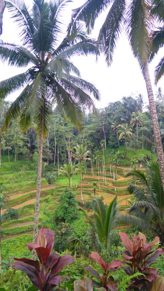 visite de très belles rizières
