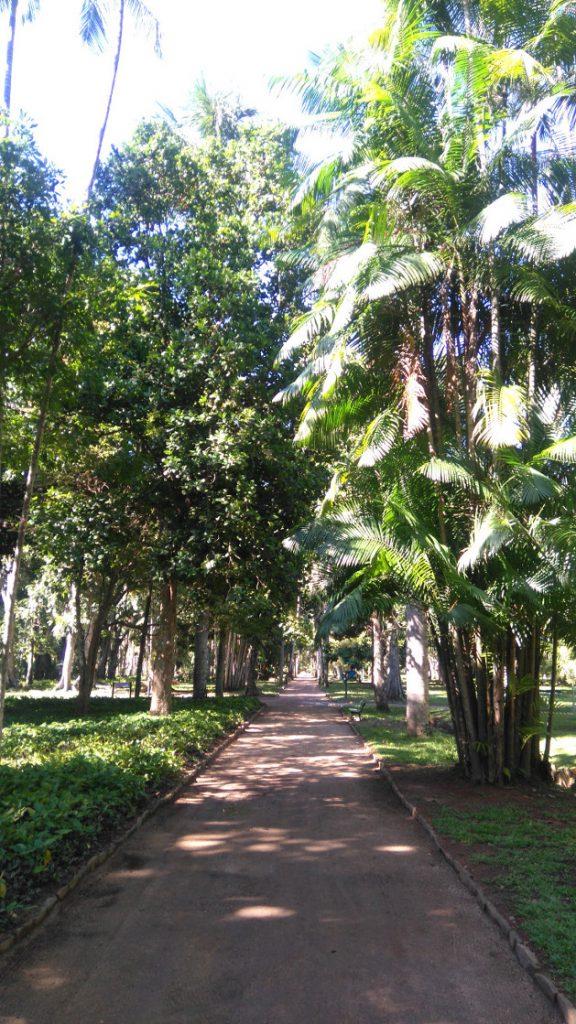 jardin botanique de Rio
