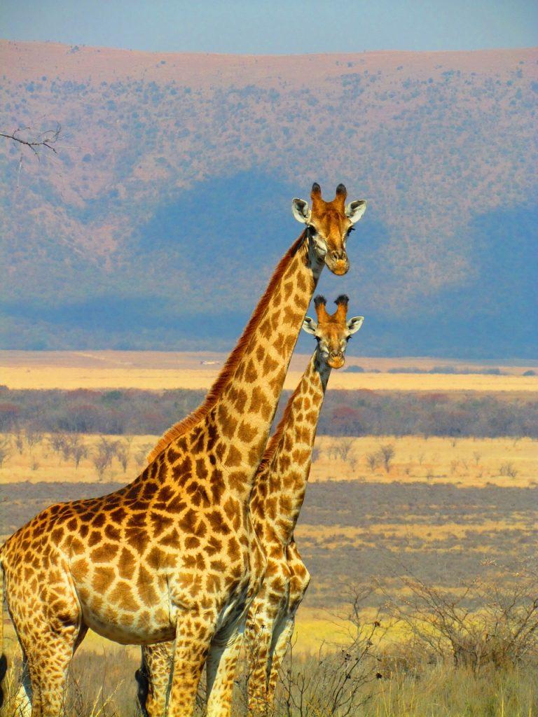 rêve de voyage en Afrique du Sud