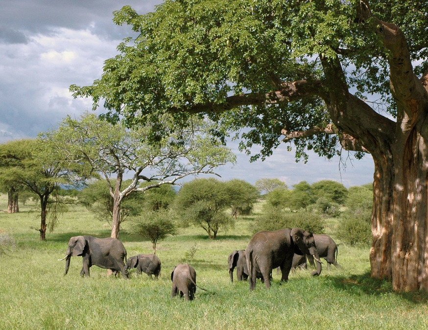 rêve de voyage en Tanzanie