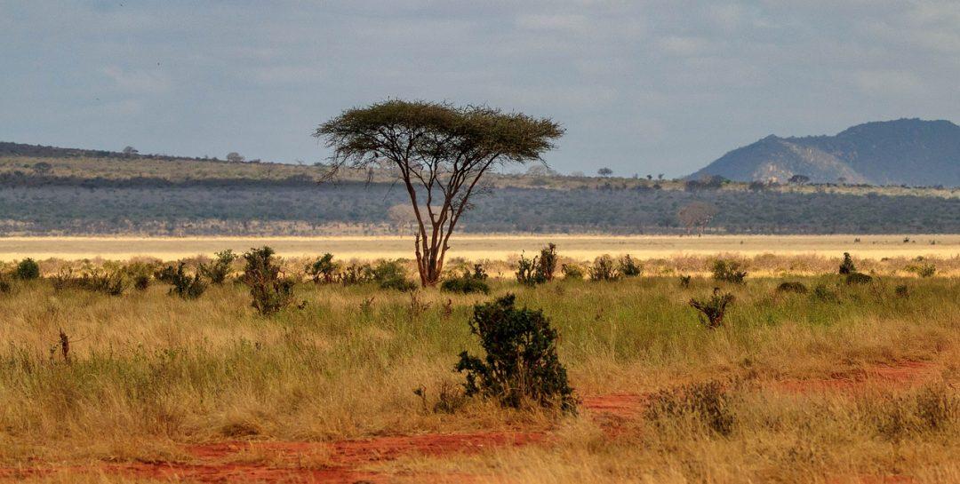critique du livre la ferme africaine