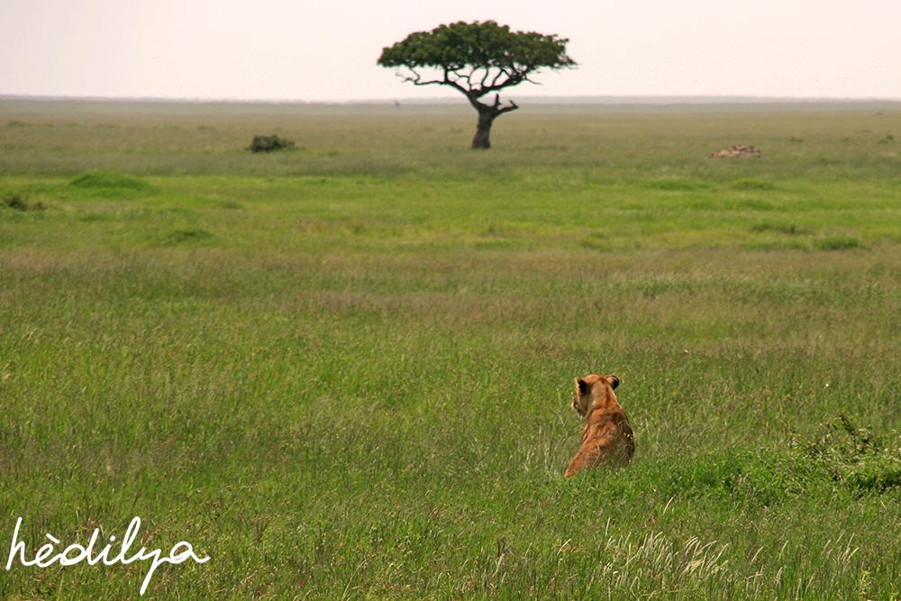 expériences de voyages en Afrique