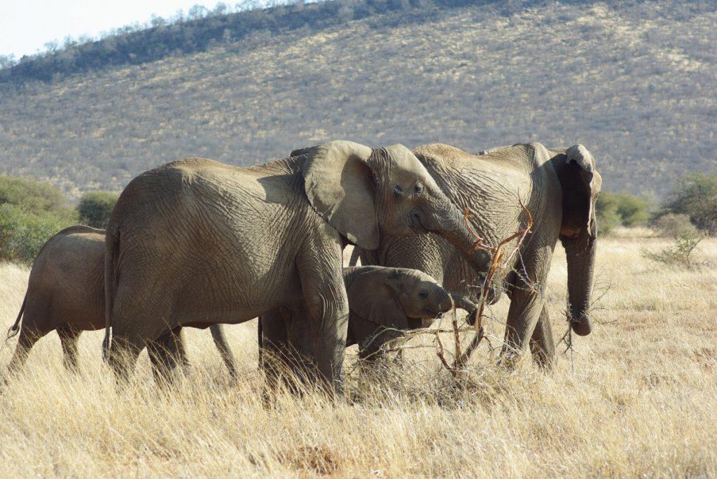 vivre en Afrique du Sud en famille
