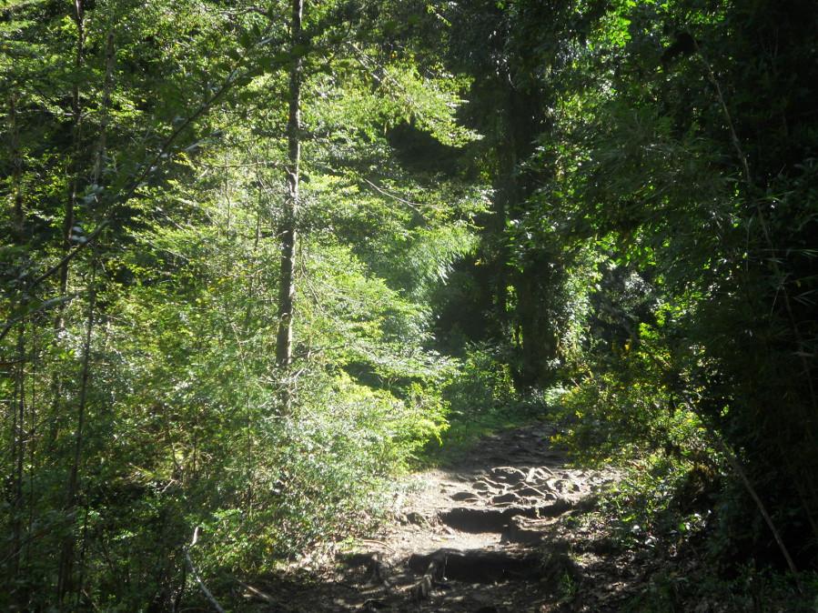 parc national Herquehue est une beauté