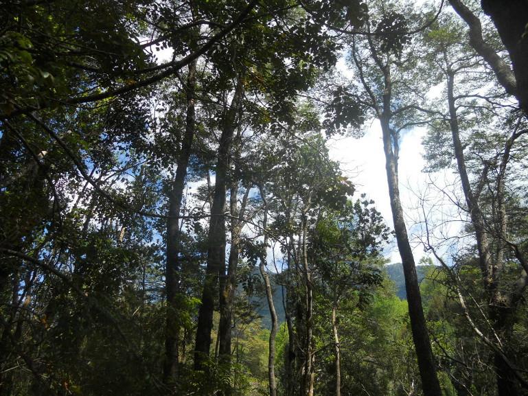 nature belle aux cascades de Caburgua près de Pucon